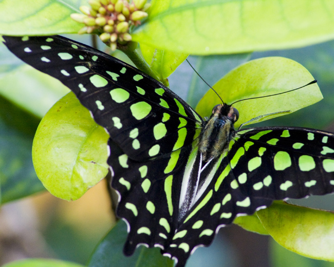 Green Butterfly, Photograph Printing, Concord, VA